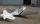 SBD Dauntless - 100cc